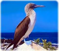 Galápagos - Aves